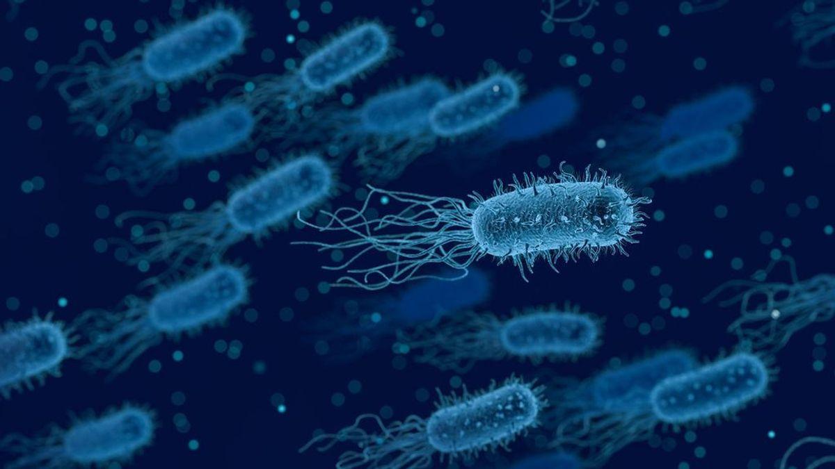 Virus y bacterias: en qué se diferencian y cómo afectan a la salud