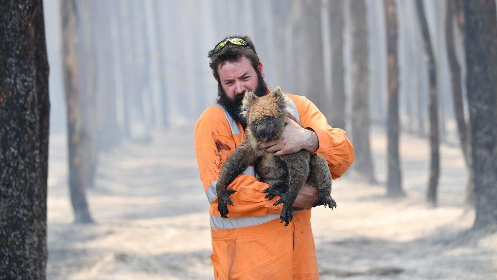 Más de mil millones de animales han muerto en los incendios de Australia - Telecinco