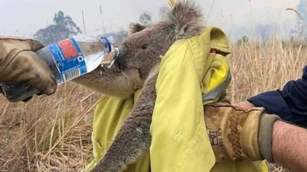 FRAME_koala