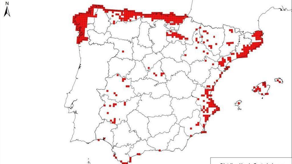 mapa del Plumero de Pampa en España