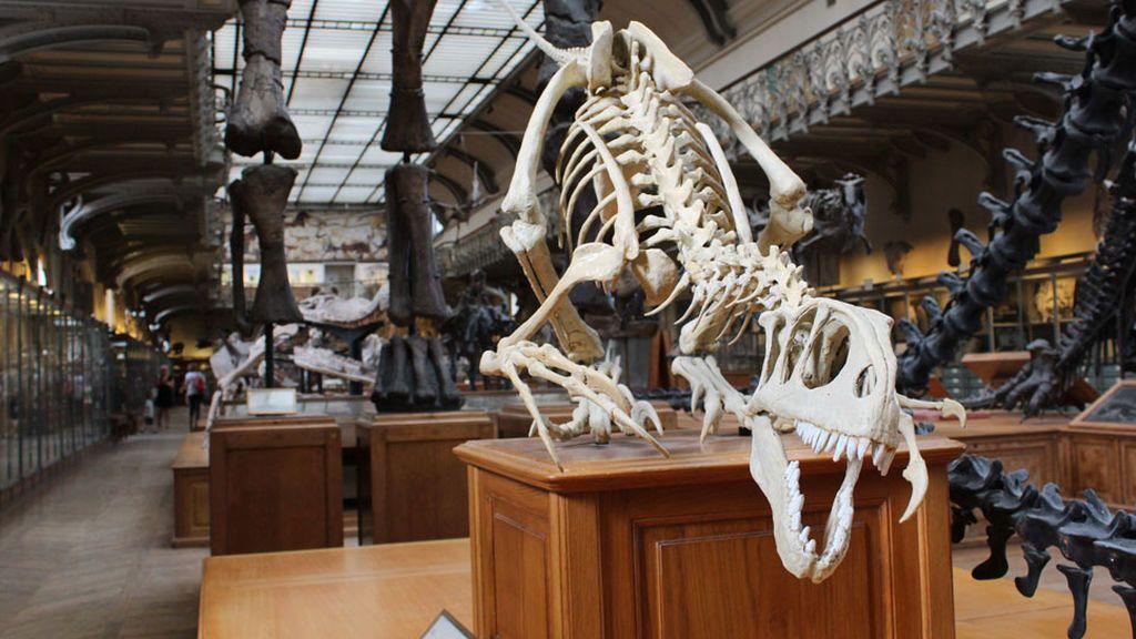 Se acabó la discusión sobre la extinción de los dinosaurios: el meteorito tuvo la culpa