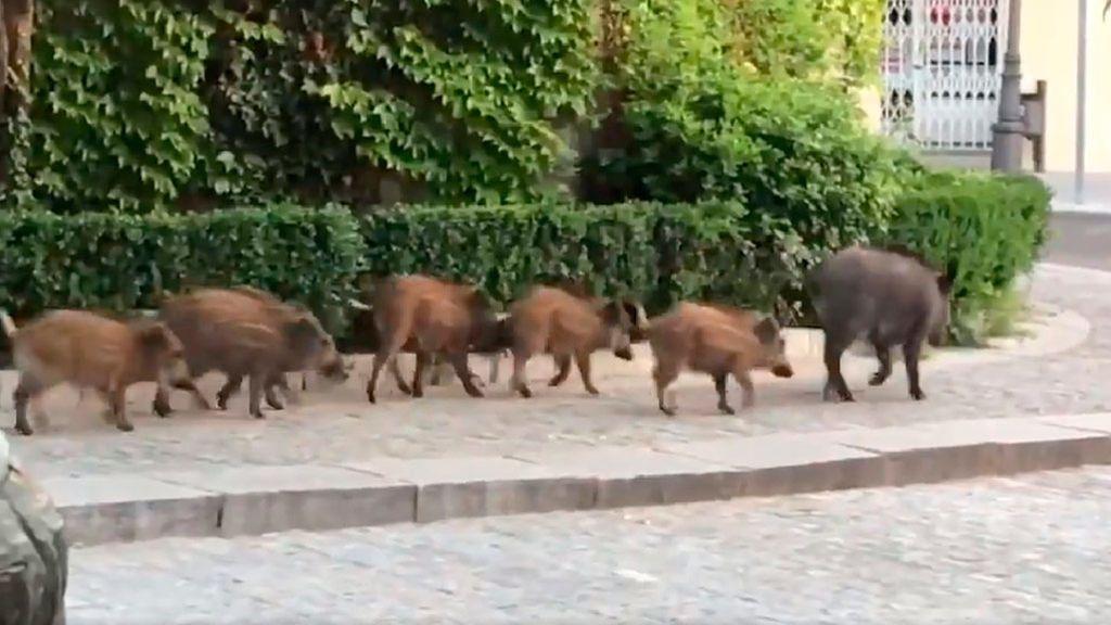 Cómo actuar si un animal se cruza en la carretera