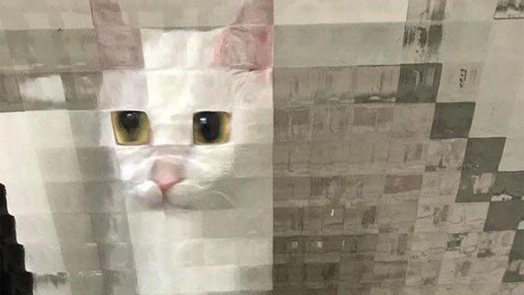 Las tiernas imágenes de gatos 'en baja resolución'