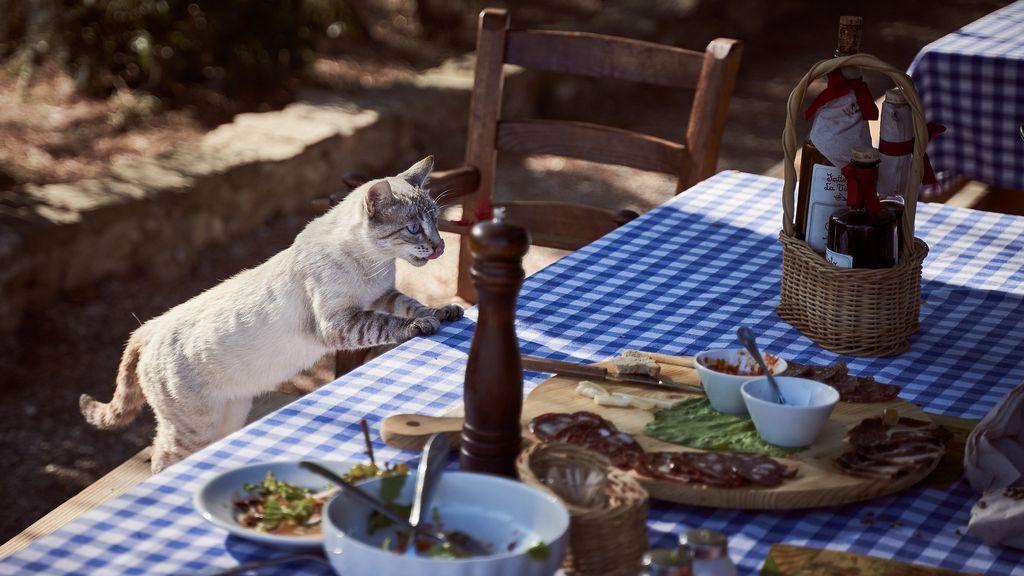 La batalla legal de dos mujeres por un gato: gastan más de 23.000 euros para determinar quien de las dos lo alimenta