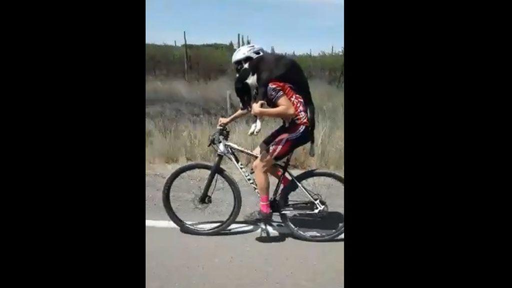 Un grupo de ciclistas rescatan a un perro abandonado en la carretera y lo ponen a salvo