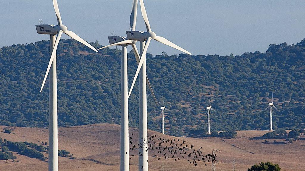 Una bandada de aves atraviesa un parque eólico