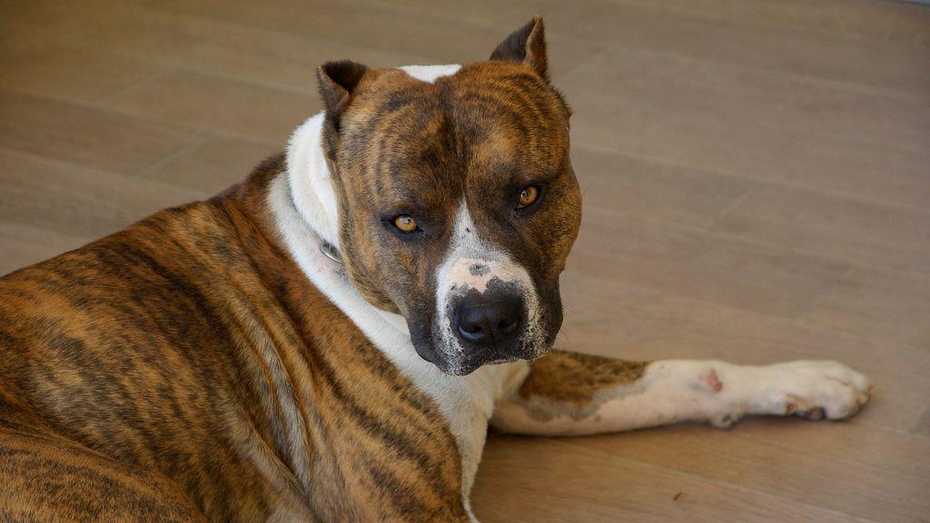 El brutal ataque de un perro en León: muerde a dos mujeres, una niña y a dos agentes de la Policía Local