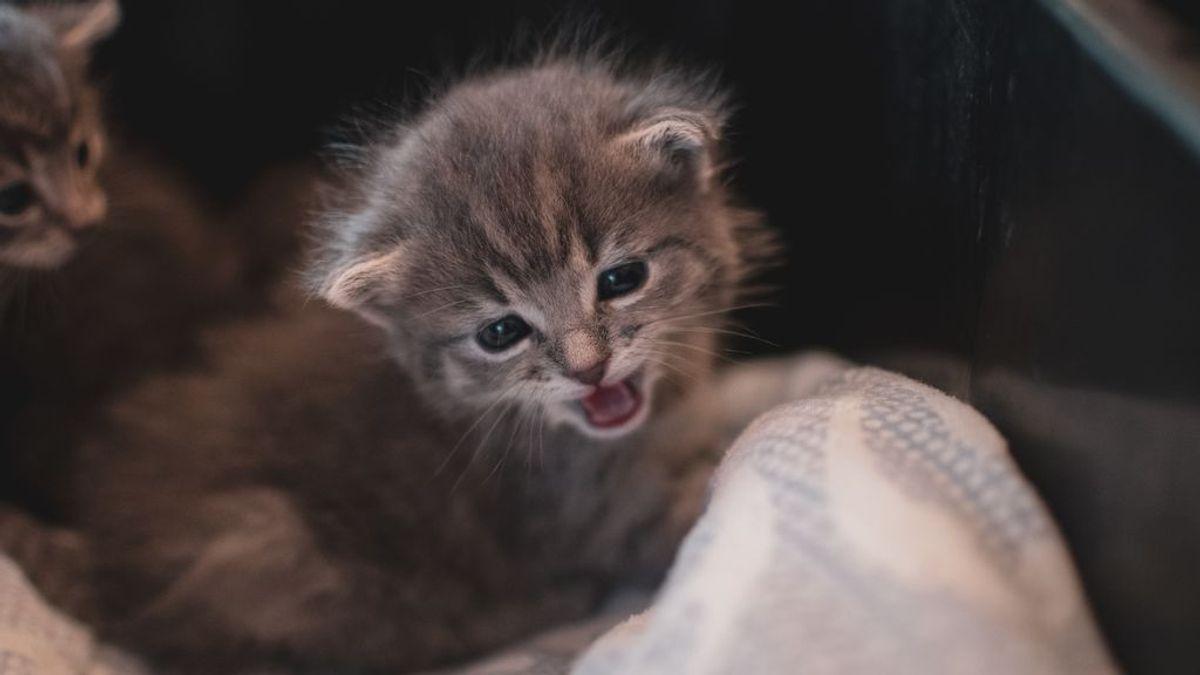 La Guardia Civil lo recuerda: con el frío hay que tener cuidado con los gatos en el capó del coche