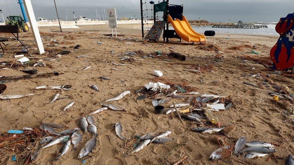 Miles de peces muertos tras la rotura de una piscifactoría por el temporal en Cataluña