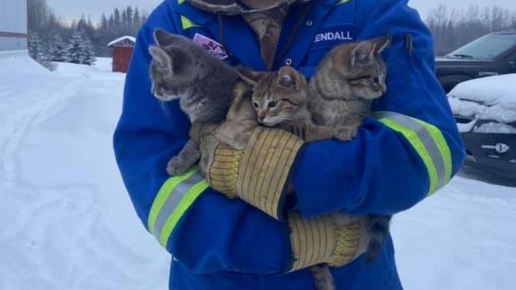 La agonía de tres cachorros de gatos atrapados en el hielo en Canadá: fueron rescatados y buscan un hogar