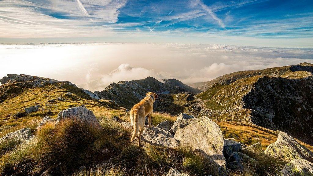 Un hombre es atacado por cinco perros mientras paseaba por el monte, en Asturias