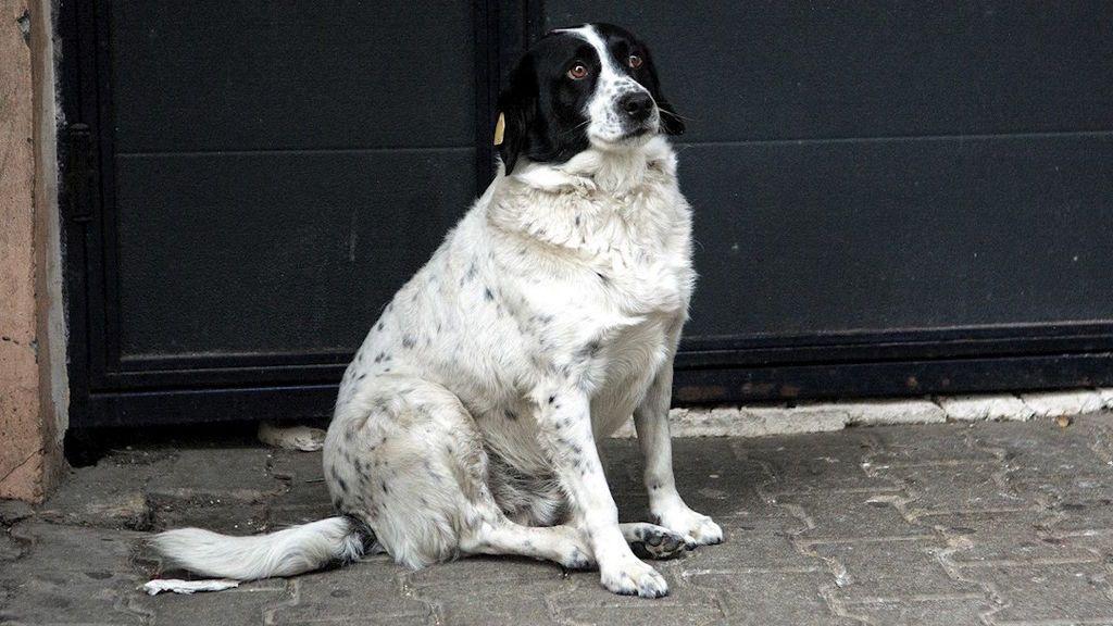 Kupata, el perro callejero que salva vidas