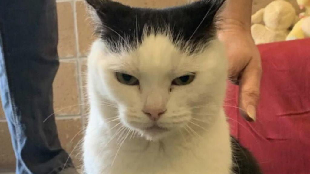 Perdita es 'el peor gato del mundo' y está en adopción: también tiene derecho a ser amada