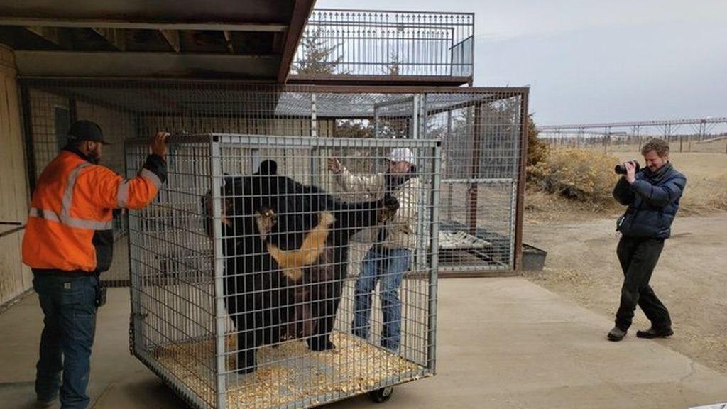 """Rescatan a un oso que un club deportivo tenía enjaulado como mascota: """"Vivió entre humillaciones y maltratos"""""""