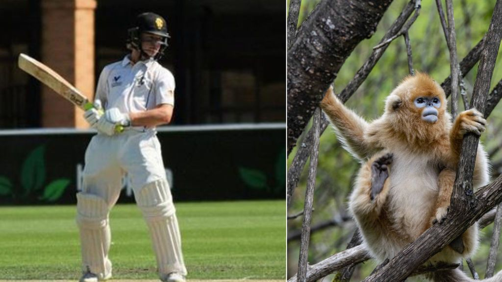 """Un jugador de cricket abandona la concentración de su equipo tras ser arañado por un mono: """"Me pasa por acercarme demasiado al recinto"""""""
