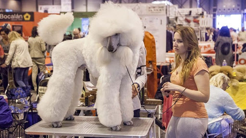 Madrid volverá a acoger la Exposición Mundial Canina después de 30 años