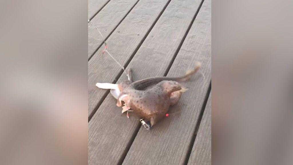 Capturan una extraña criatura en la costa de Nueva York: las redes sociales especulan ante la sorpresa