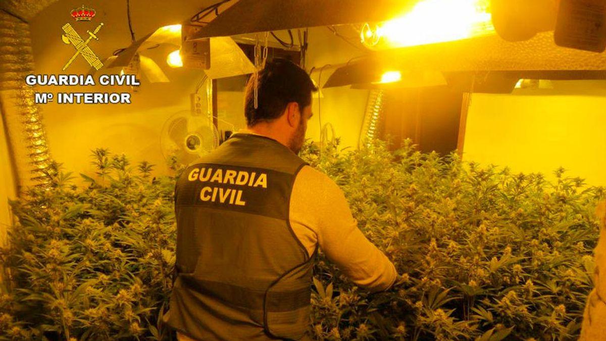 Hallan un cultivo de marihuana en Alicante que amenazaba con dejar sin luz a todo un pueblo