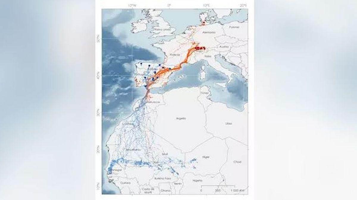 El destino favorito de las cigüeñas ha cambiado: vienen hacía España