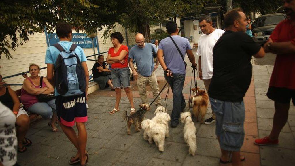 La Policía Nacional investiga casos de envenenamientos de perros en Marbella
