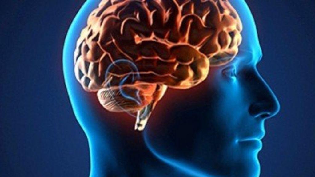 Descubren las variantes genéticas que determinan si el cerebro es masculino o femenino