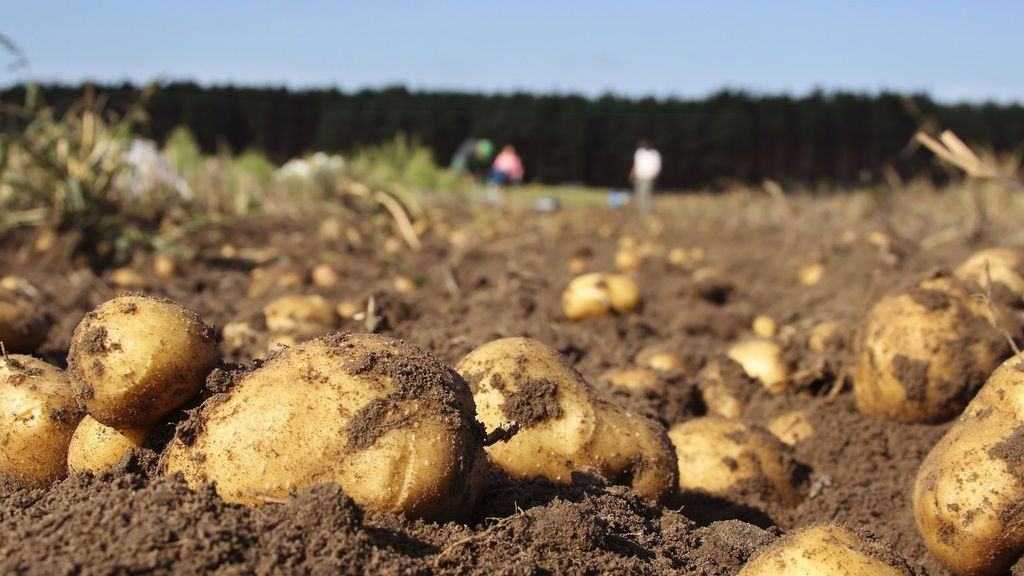 Las patatas y las cebollas multiplican por siete su precio del campo a la mesa