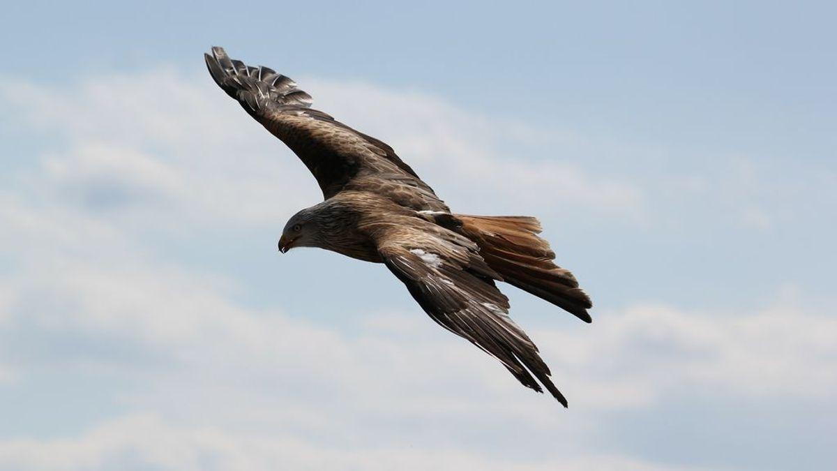 Una fidelidad que no conoce fronteras: el águila Kira visita la tumba de su criador muerto hace meses