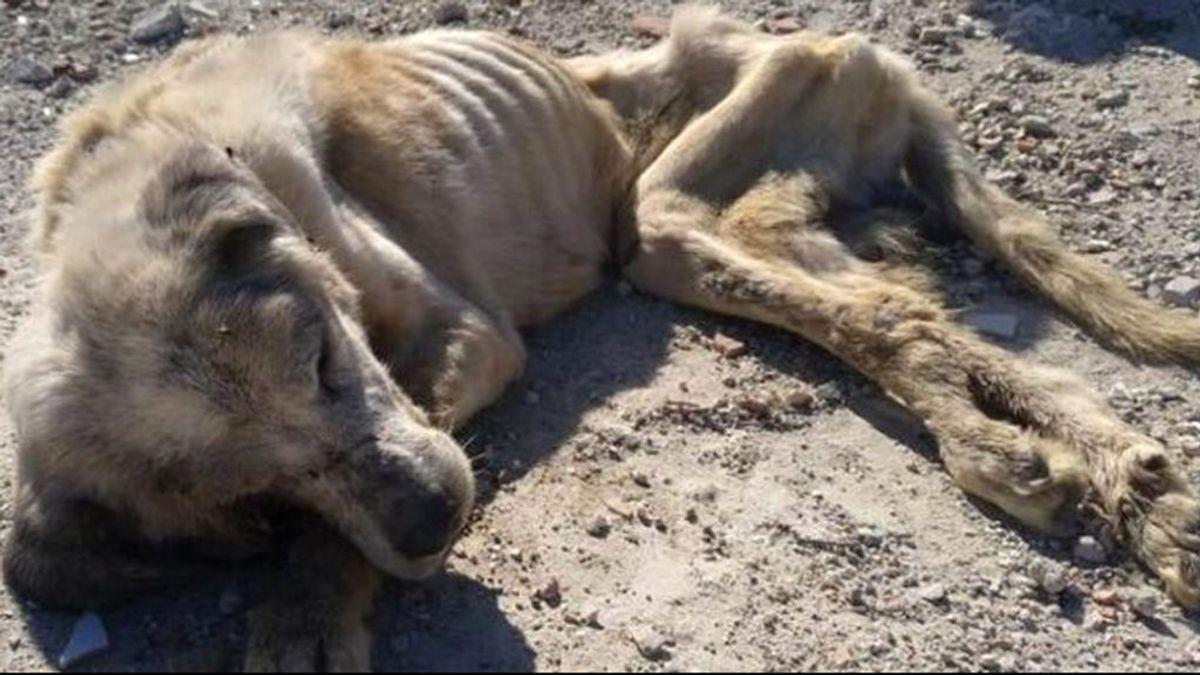 Salvar a Ragnar, el perro que se muere de hambre