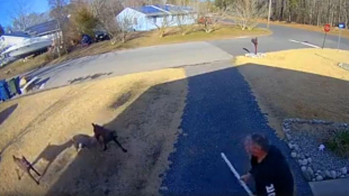 """Tres perros siembran el terror de todo un vecindario: """"Nadie debería vivir con miedo a salir a la calle"""""""