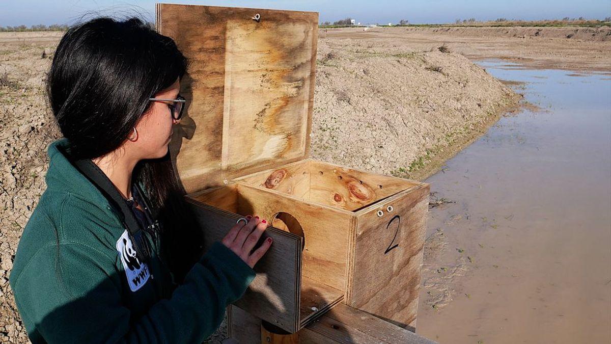 Se ofrecen casas para patos: razón, Trebujena