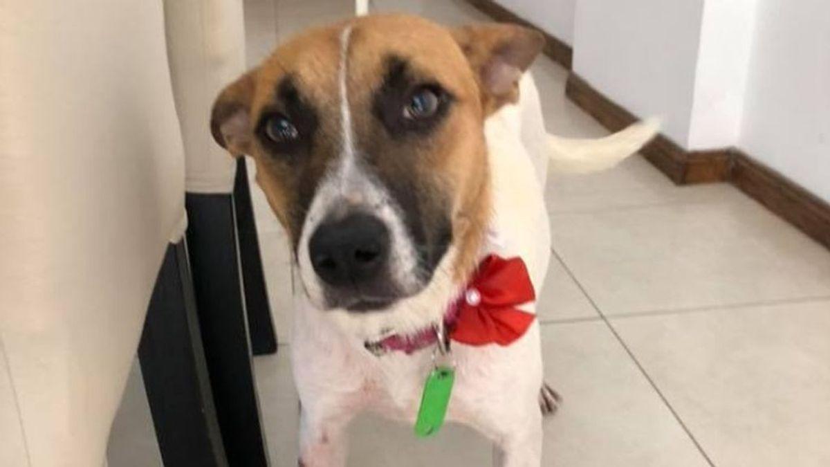 Flor, una perra golpeada por una señora en el metro, busca a sus dueños: podría haberse perdido