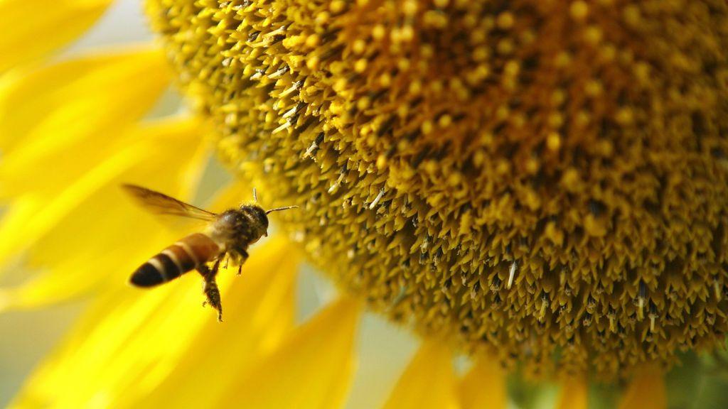 Se disparan los niveles de polen: las zonas de España en alerta