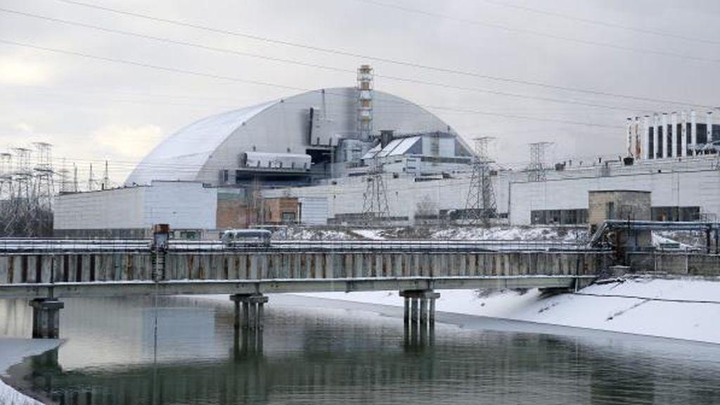 Descubren hongos que se alimentan de radiación dentro del reactor de Chernóbil