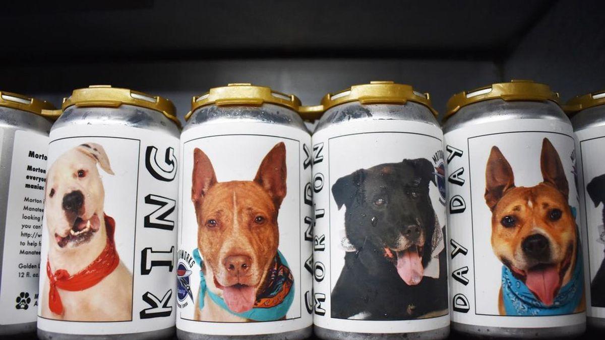 Los perros que habían sido adoptados en las latas