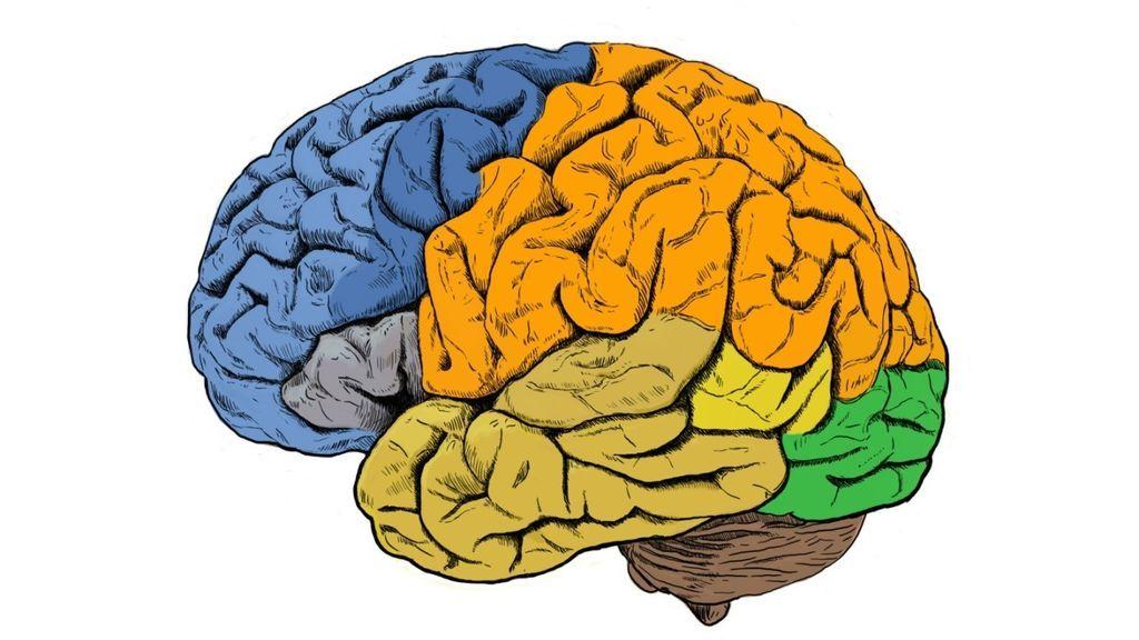 Las neuronas controlan el movimiento 'conversando' entre ellas