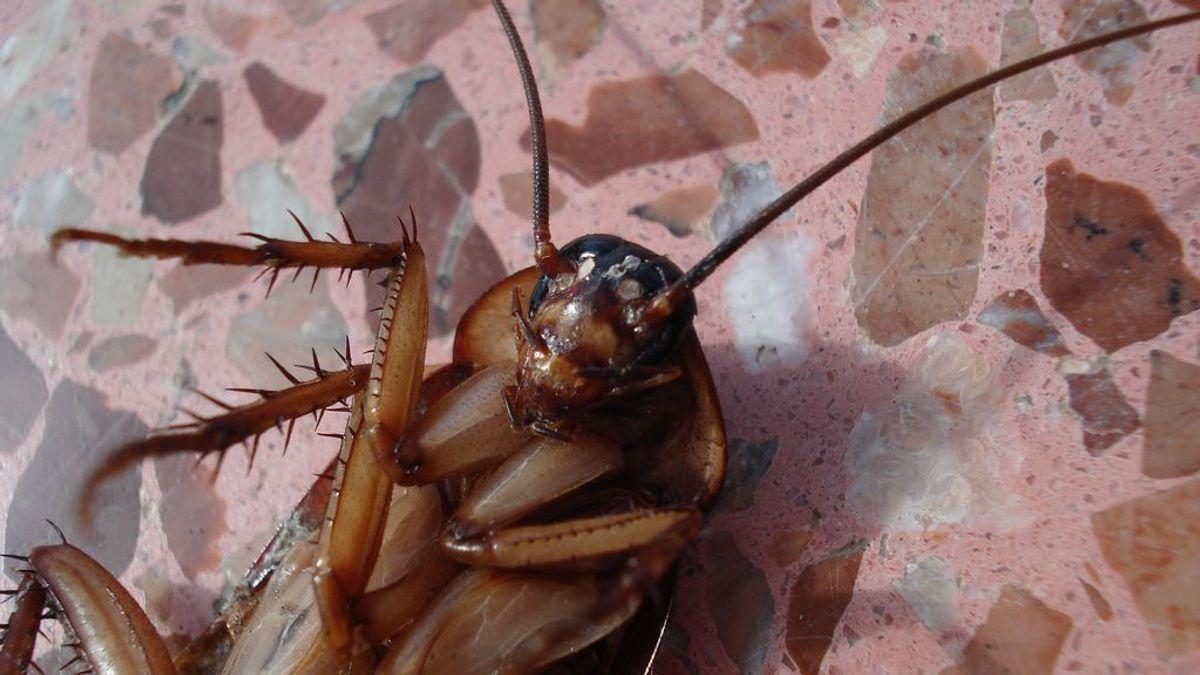Día Anti San Valentín: nombrar a una cucaracha como tu ex y echarla de alimento a los animales
