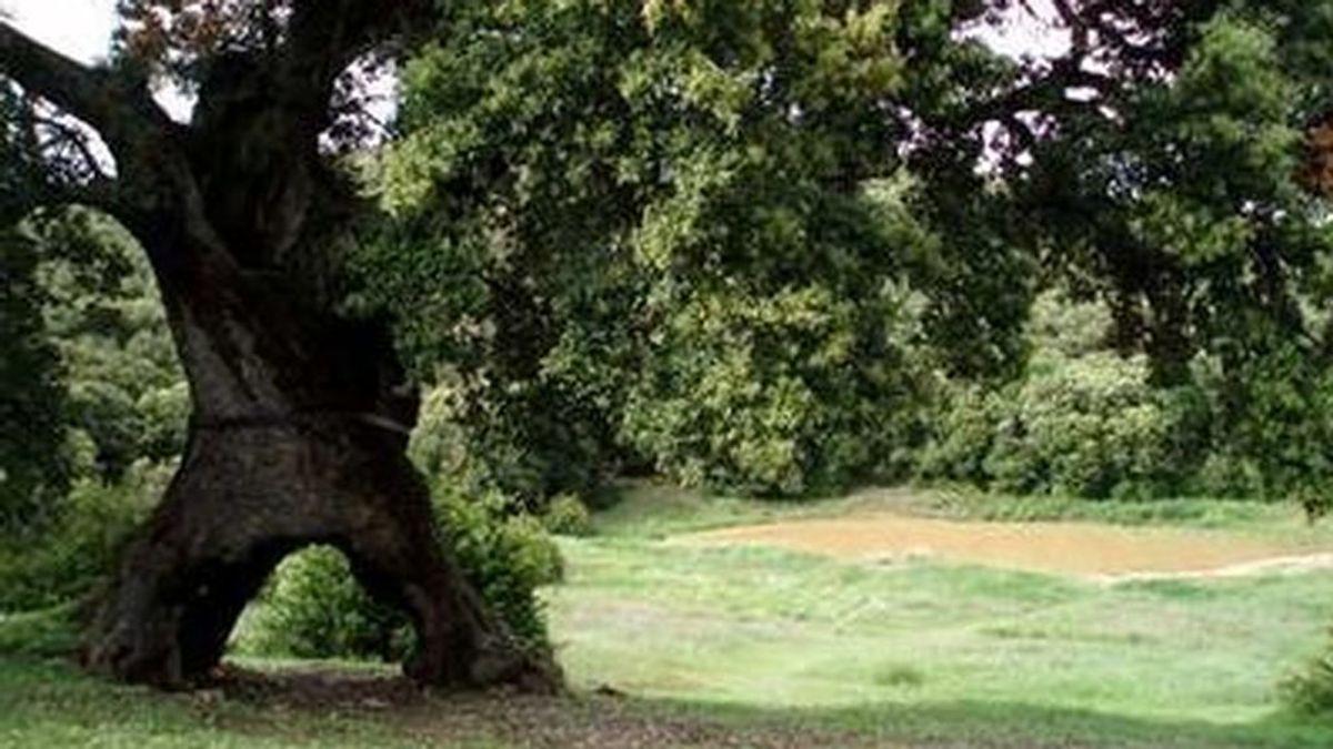 """BORRADOR """" árbol europeo del año"""""""