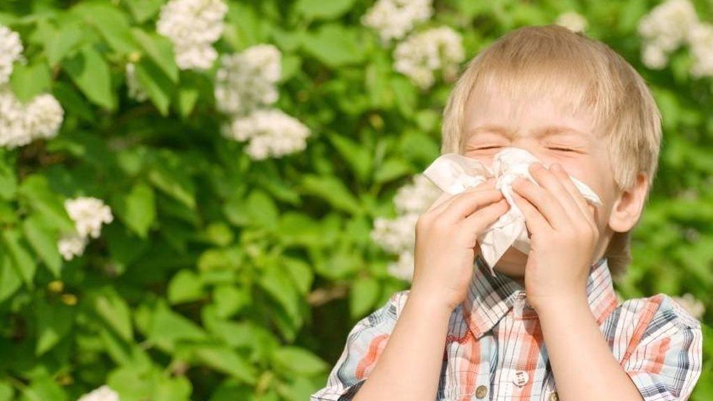 Pico de alergias en febrero: la previsión de arizónicas y otras para lo que queda de mes