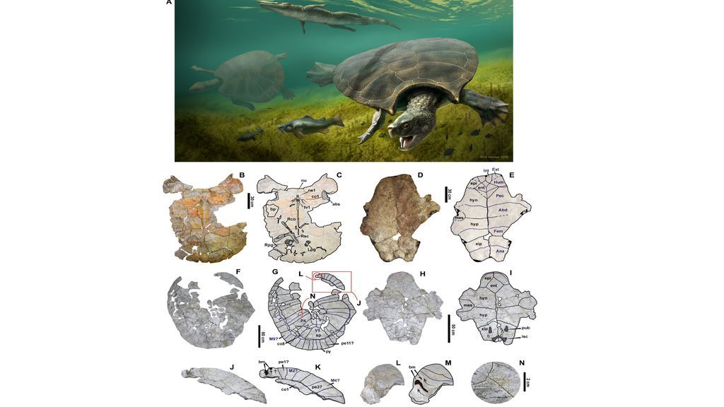 La mayor tortuga de la historia tuvo un caparazón de tres metros y cuernos