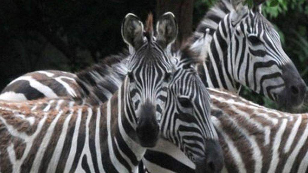 Un tercio de  todas las especies de animales y plantas podrían extinguirse en 50 años