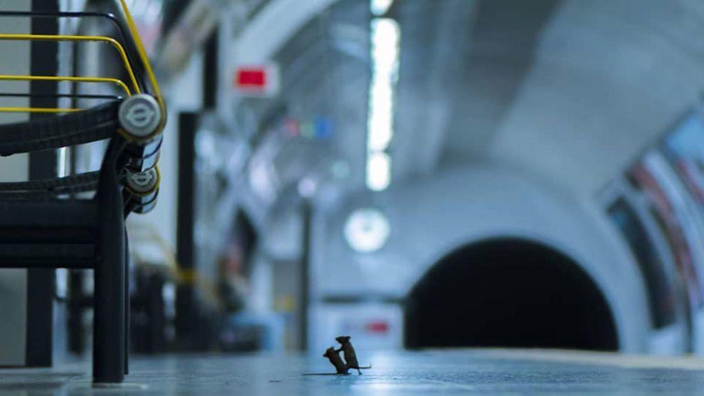 La mejor foto de vida silvestre es 'Disputa en la estación': dos ratones peleando en el metro por unas migas de pan