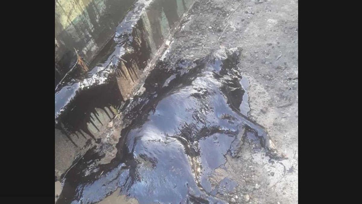 9 horas, 50 litros de aceite y decenas de voluntarios: el difícil rescate de Aloe, una perra sepultada en petróleo