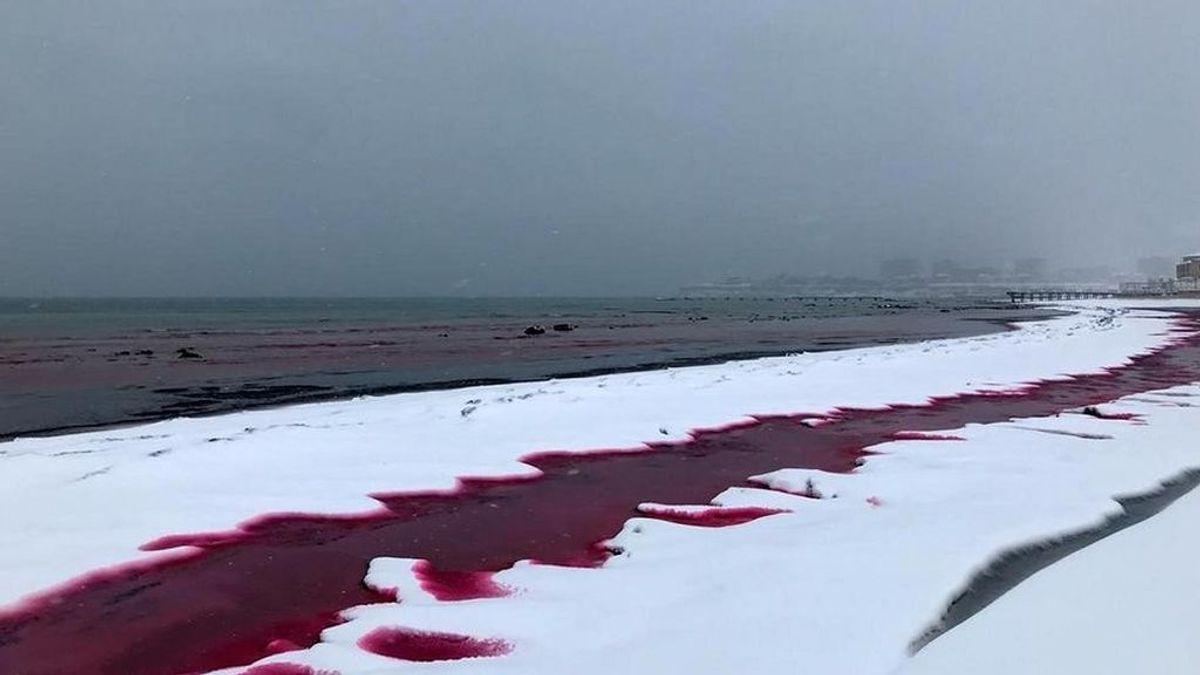 El Mar Caspio se tiñe de sangre