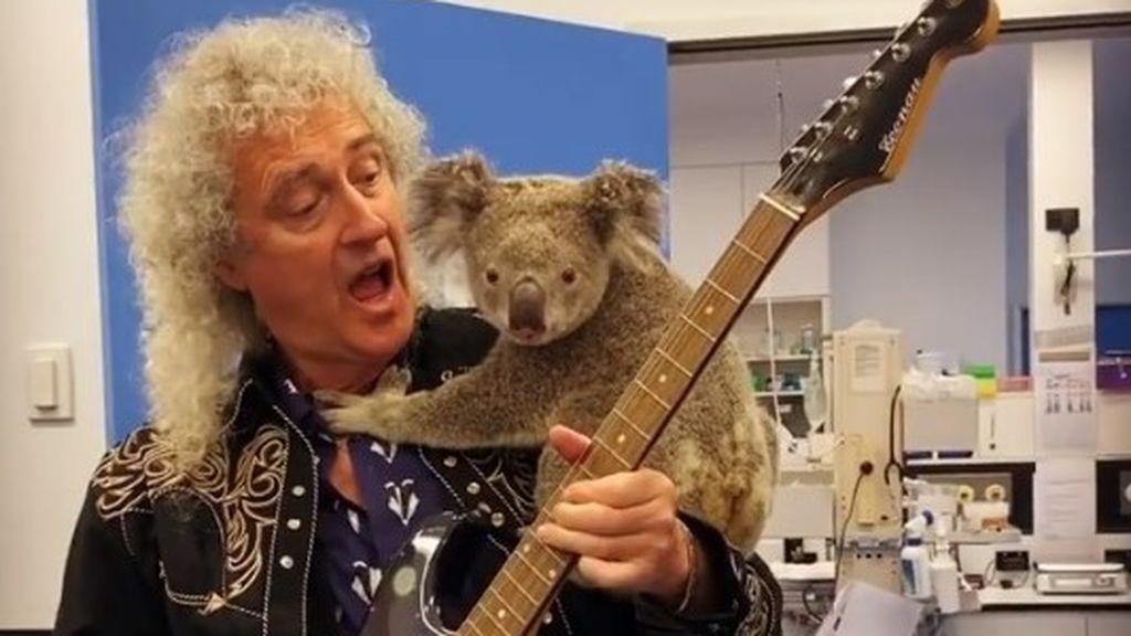El 'solo' más solidario del guitarrista de Queen: música para un koala afectado por los incendios de Australia