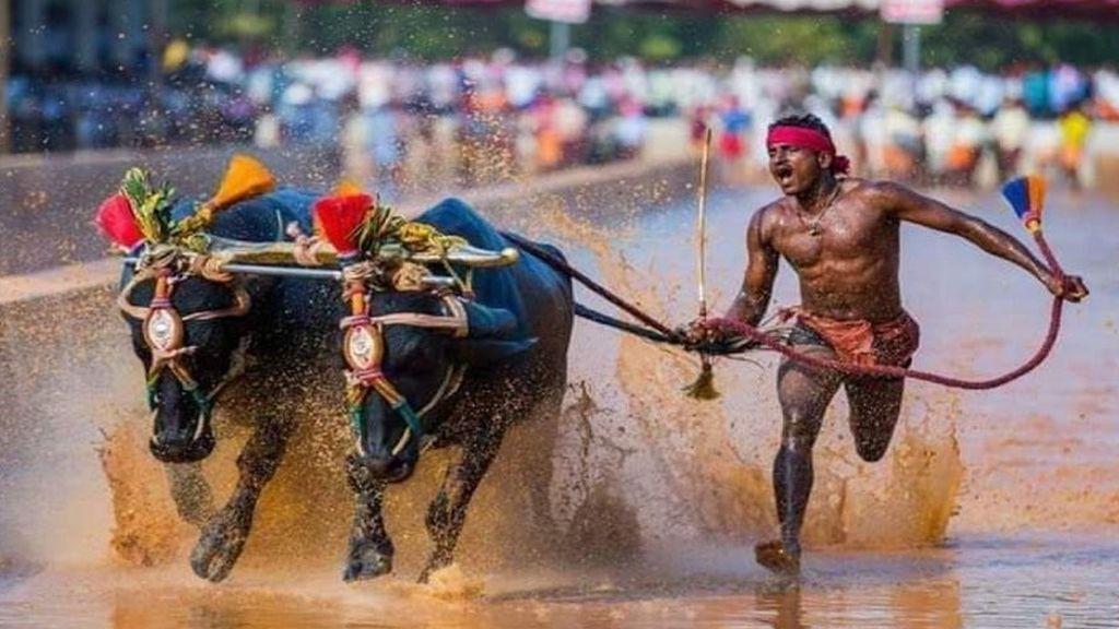Un ciudadano indio rompe el récord de Usain Bolt de los 100 metros lisos corriendo tras dos búfalos