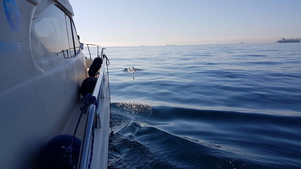 Un cetaceo junto al Miamita