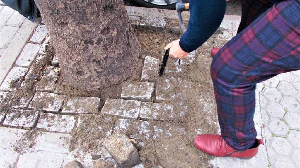 Ciudadanos anónimos, pico en mano, liberan los árboles 'estrangulados' por los adoquines en Sevilla