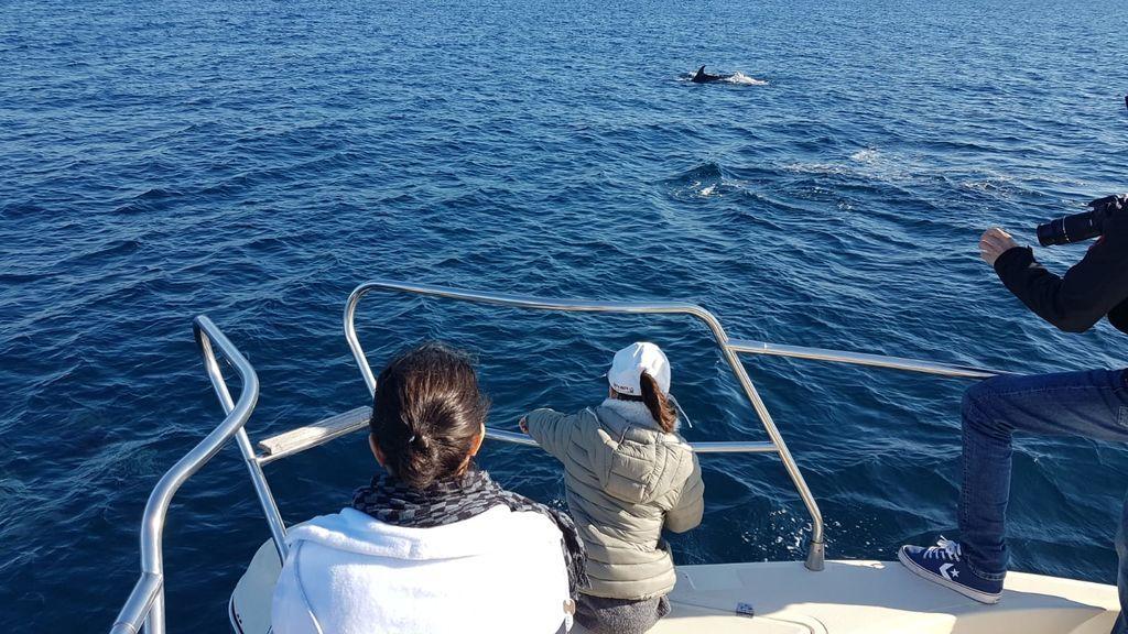 El Miamita avistando cetáceos