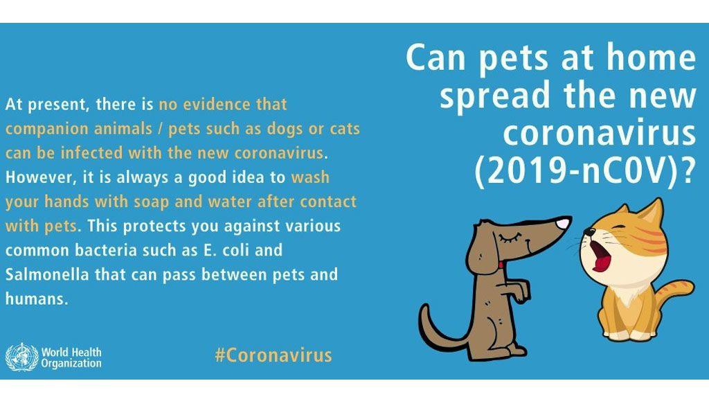 Advertencia de la OMS sobre el presunto contagio del Covid-19 en mascotas