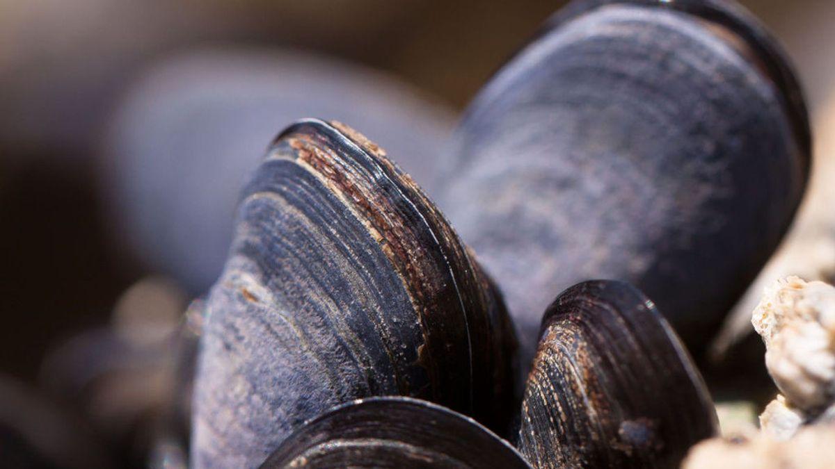 Miles de mejillones se cuecen en el mar de Nueva Zelanda por las altas temperaturas